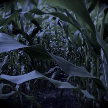 Der Klang der raschelnden Blätter schien sich dabei nach und nach zu verändern. Zuerst noch ganz unmerklich, dann immer stärker. Das Rascheln klang allmählich wie ein Zischeln und Tuscheln.