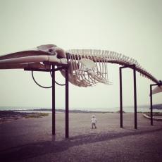 Der Tod war in Gestalt eines Pottwalkadavers bis hierher an die dunkelste Stelle des Meeres hinabgesunken und hatte dadurch Leben ermöglicht.